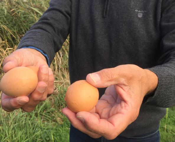 eieren-small