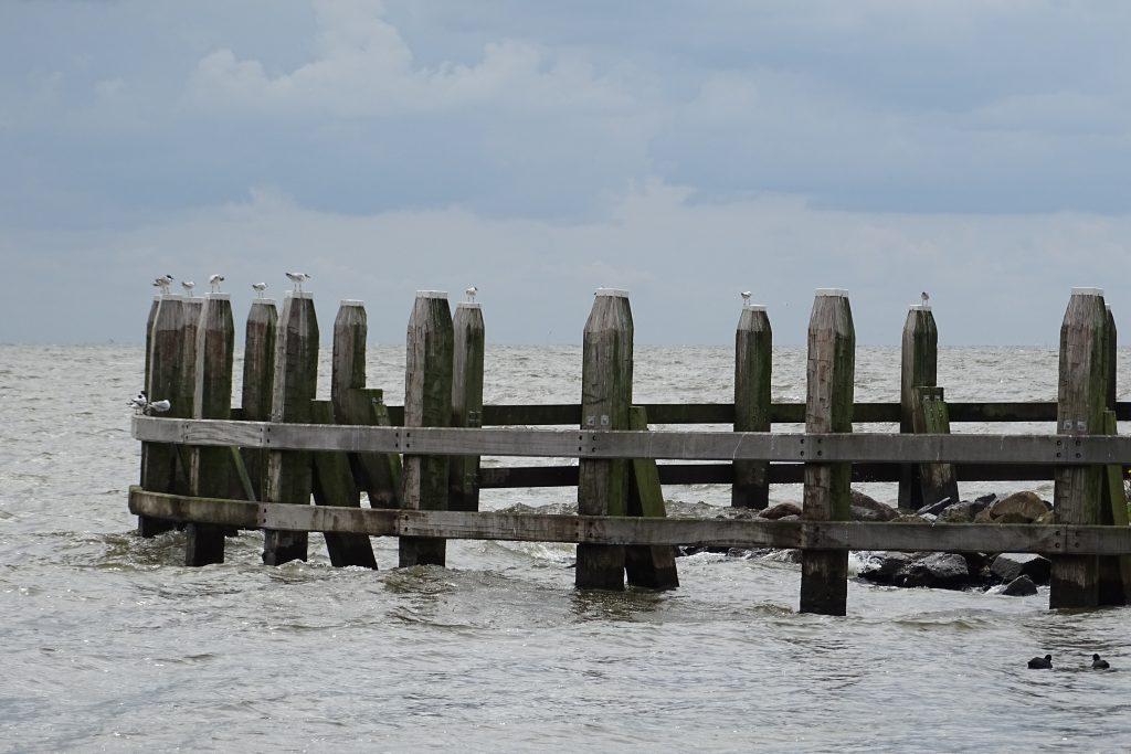 2018-06-17 Zeilen op het IJsselmeer met Jan Albert Kram stg Vaarkracht (99)
